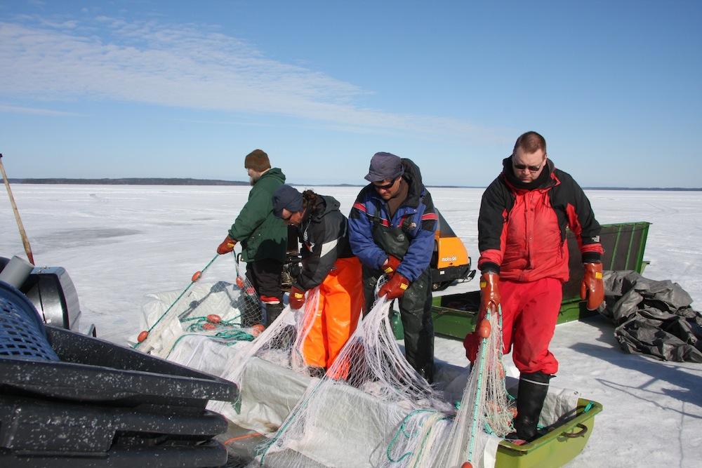 OSK Lumimuutoksen jäseniä ja Pohjois-Karjalan kalastajia talvinuotalla Puruvedellä 2010. Kuva: Tero Mustonen, 2014