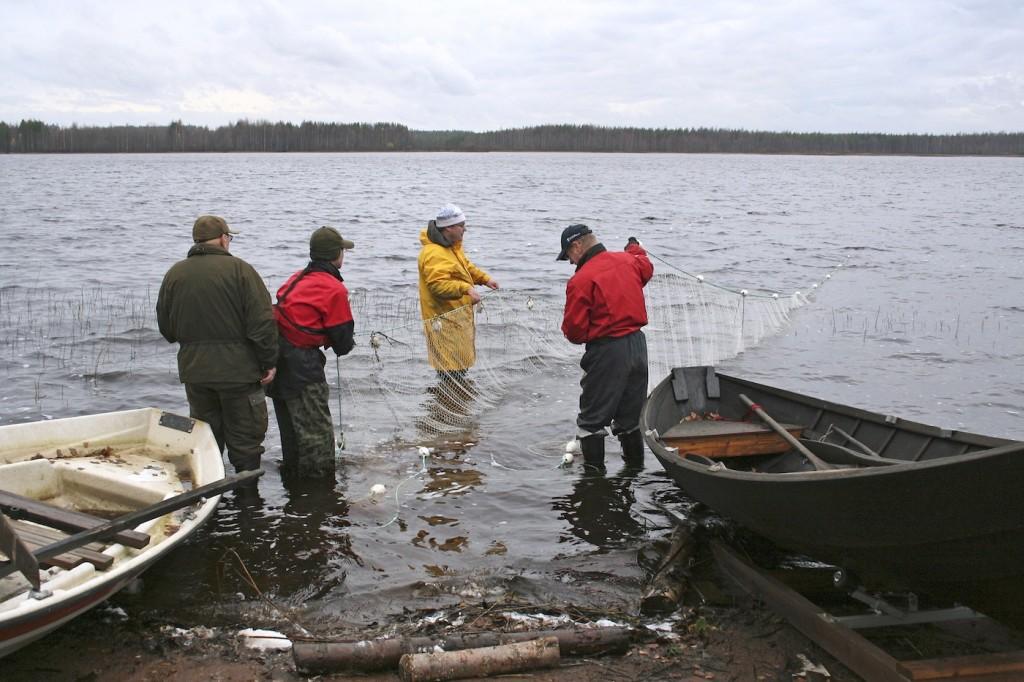 Nuottausta on elvytetty valuma-alueella kalastorakenteen selvittämiseksi Nordic-verkkotyöskentelyn lisäksi. Kuva: Tero Mustonen, 2014.