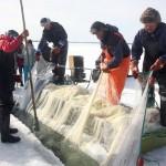 Puruveden talvinuottaajat -dokumenttielokuva, 35 minuuttia, SUOMI