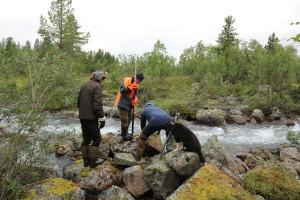 Työryhmä vierittää kiviä takaisin virtaan. Kaikki työvaiheet olivat pääasiassa käsityötä.