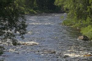 Koitajoki Möhkössä. Kuva: Eero Murtomäki
