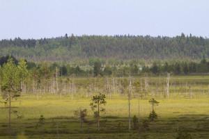 Kesonsuo. Kuva: Eero Murtomäki